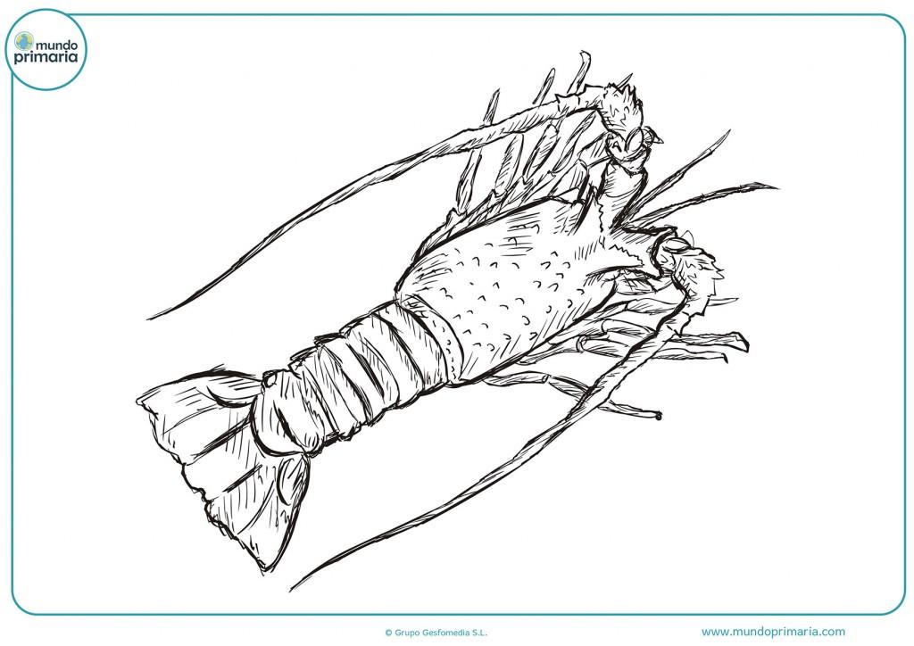 Colorea este dibujo de un gran cangrejo con antenas grandes