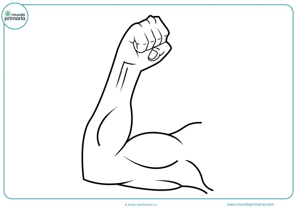 Dibujo de un biceps para colorear