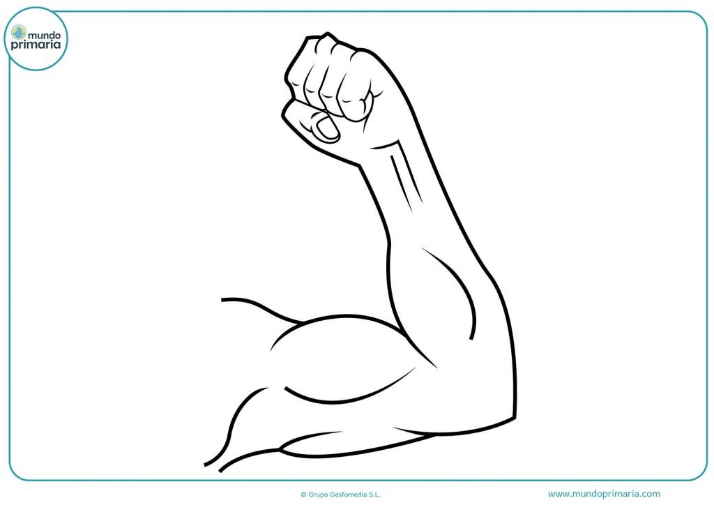 Dibujo de un brazo haciendo fuerza para pintar
