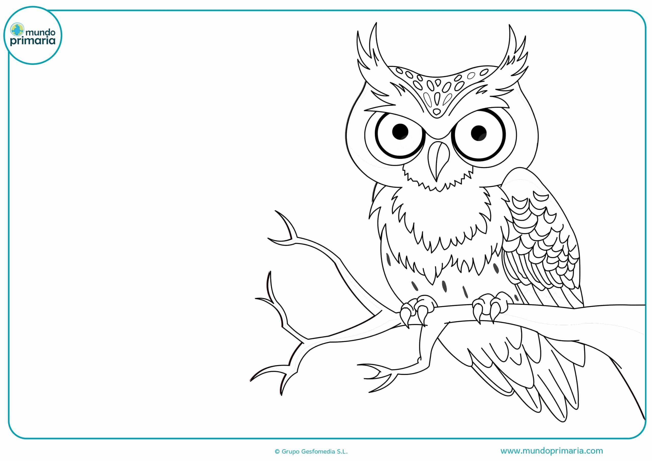 Dibujos de animales del bosque para colorear - Mundo Primaria