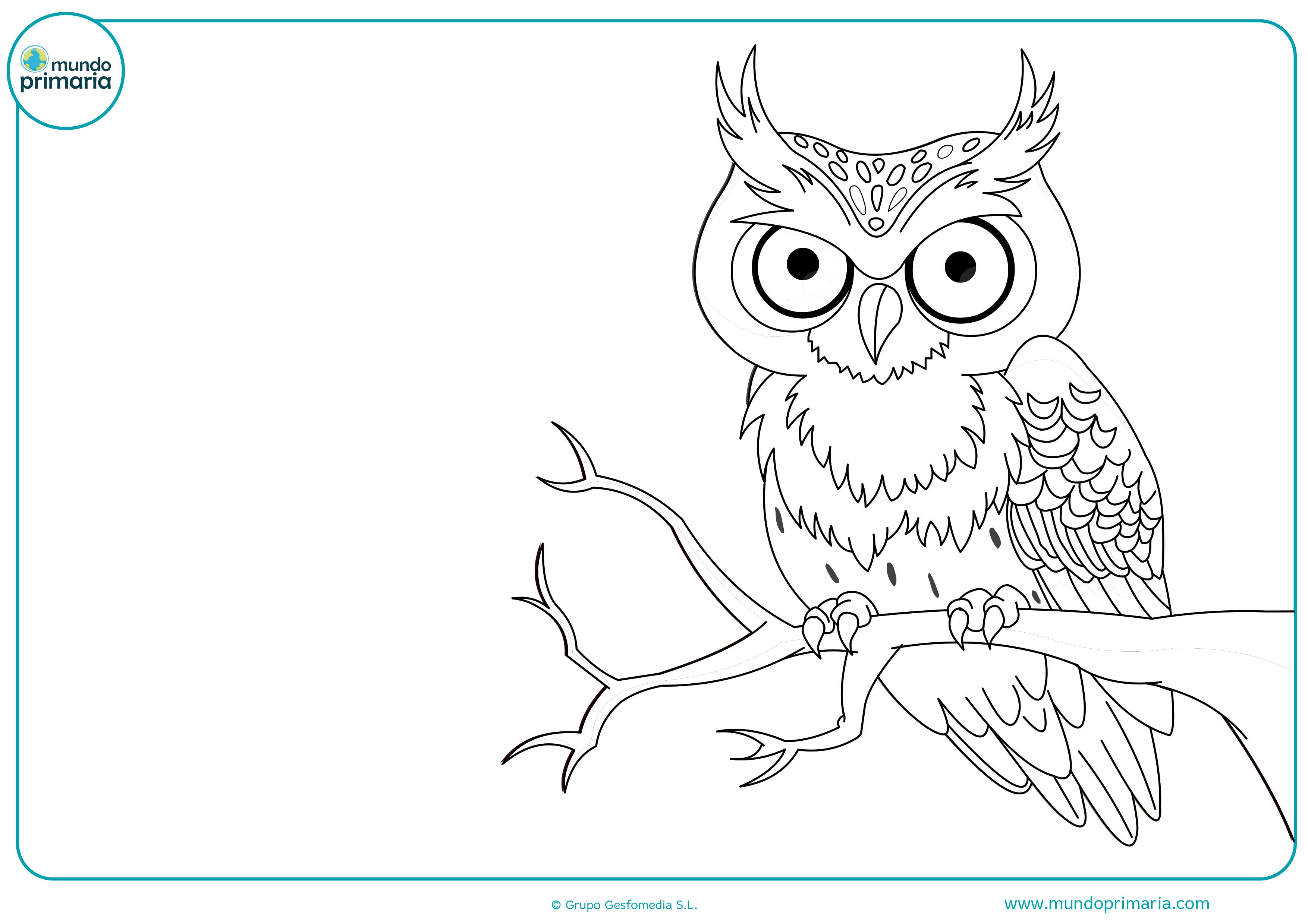 Colorear dibujos animales bosque