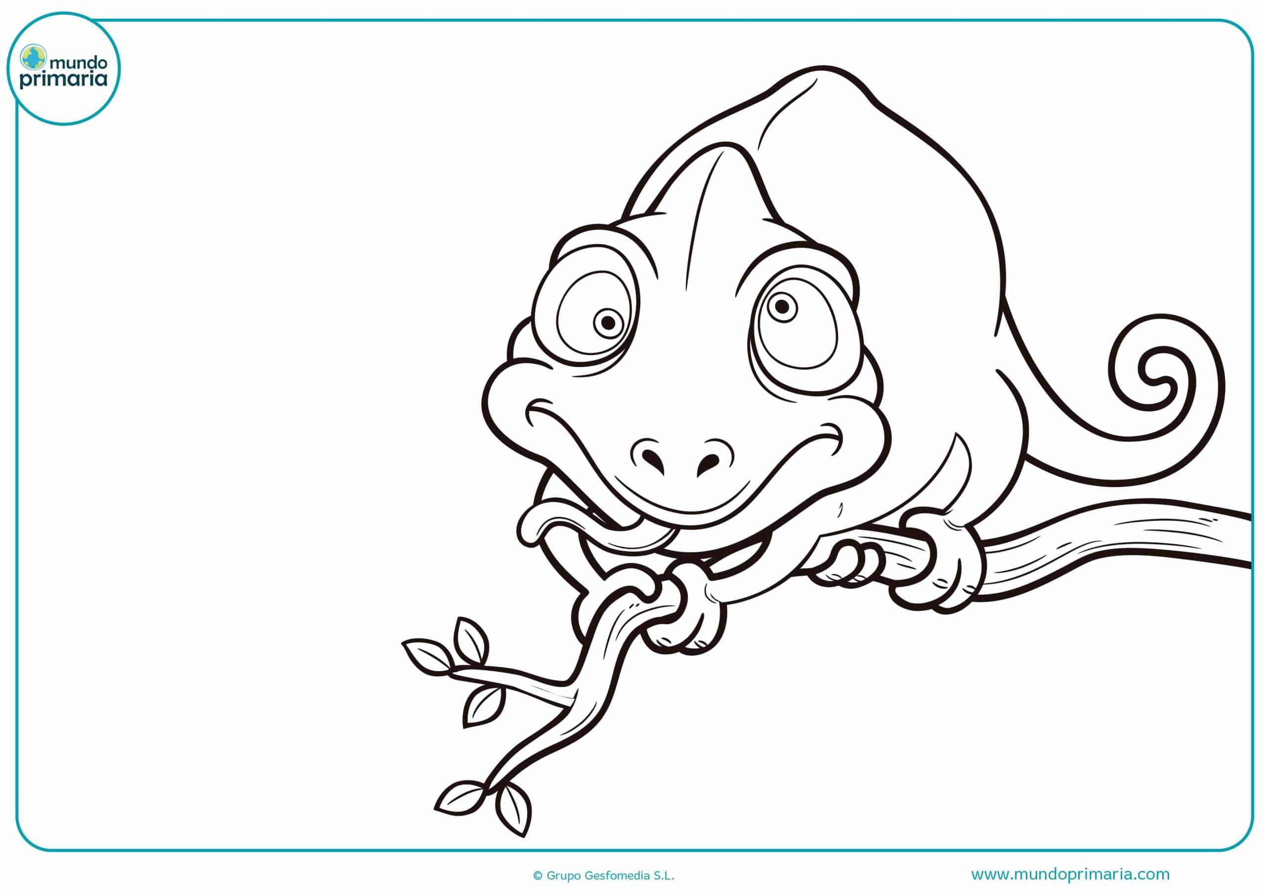 Dibujos Para Colorear En Linea: Dibujos De Animales De La Selva Para Colorear