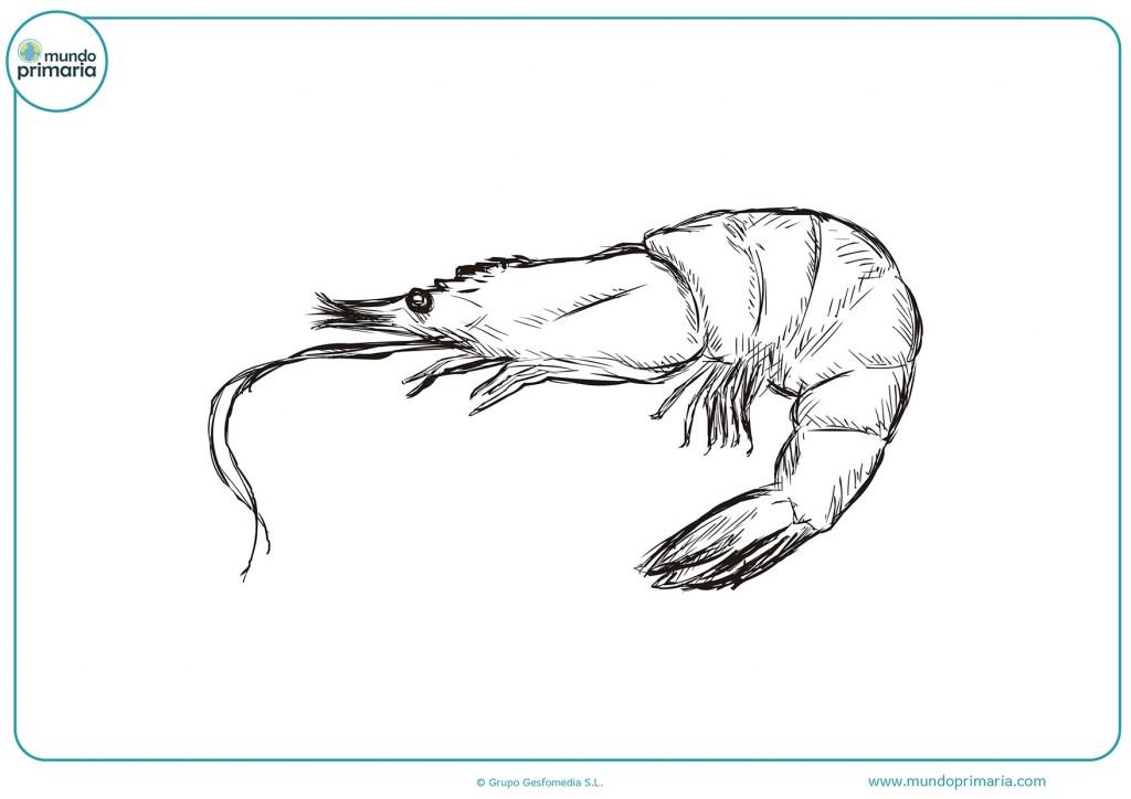 Descarga y termina con colores el dibujo del camarón
