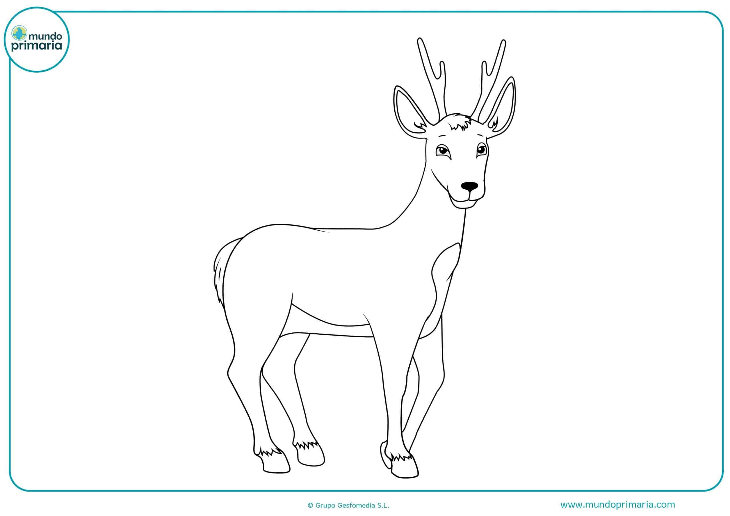 Dibujos animales bosque colorear para imprimir