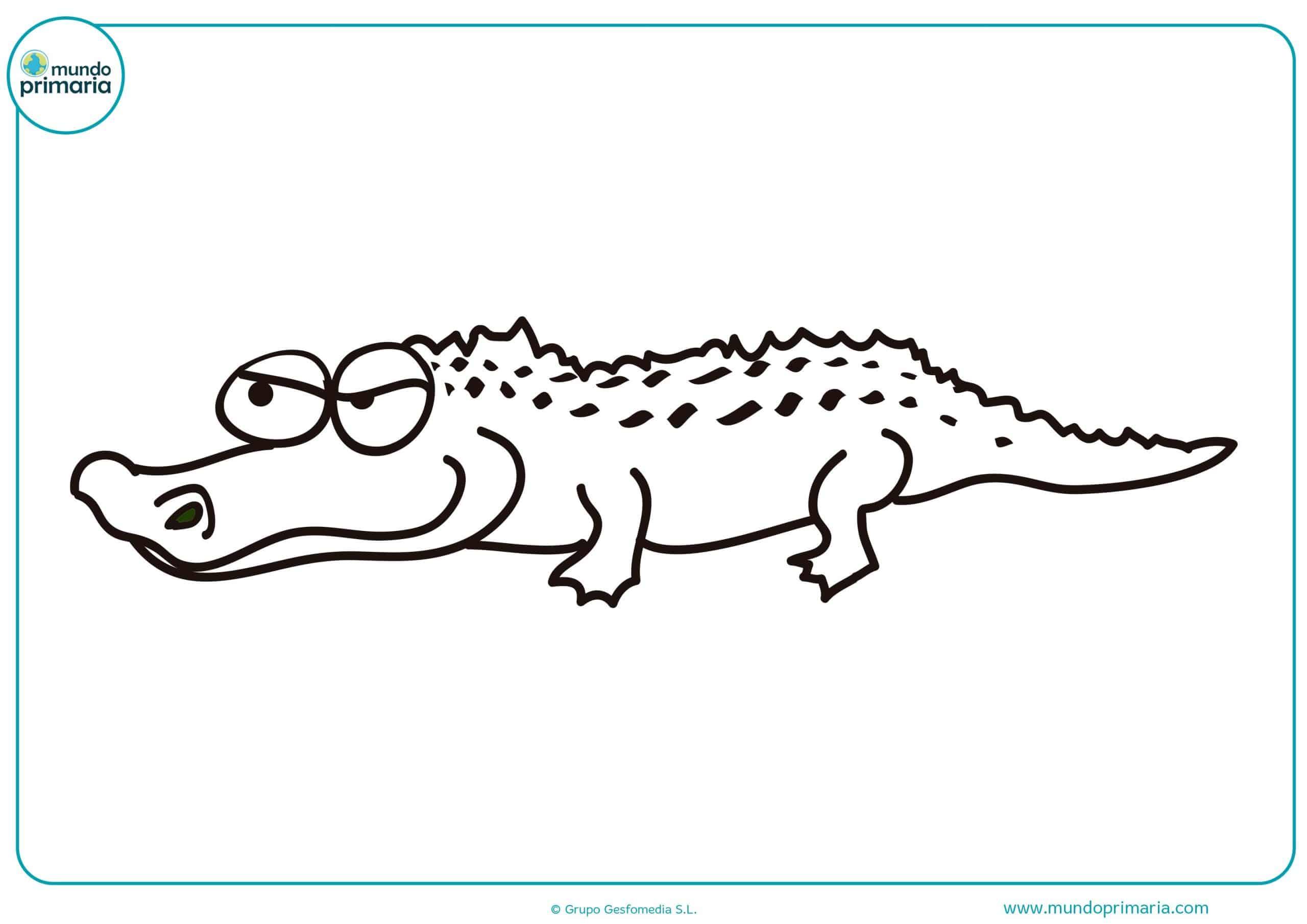 Dibujos animales salvajes colorear para imprimir