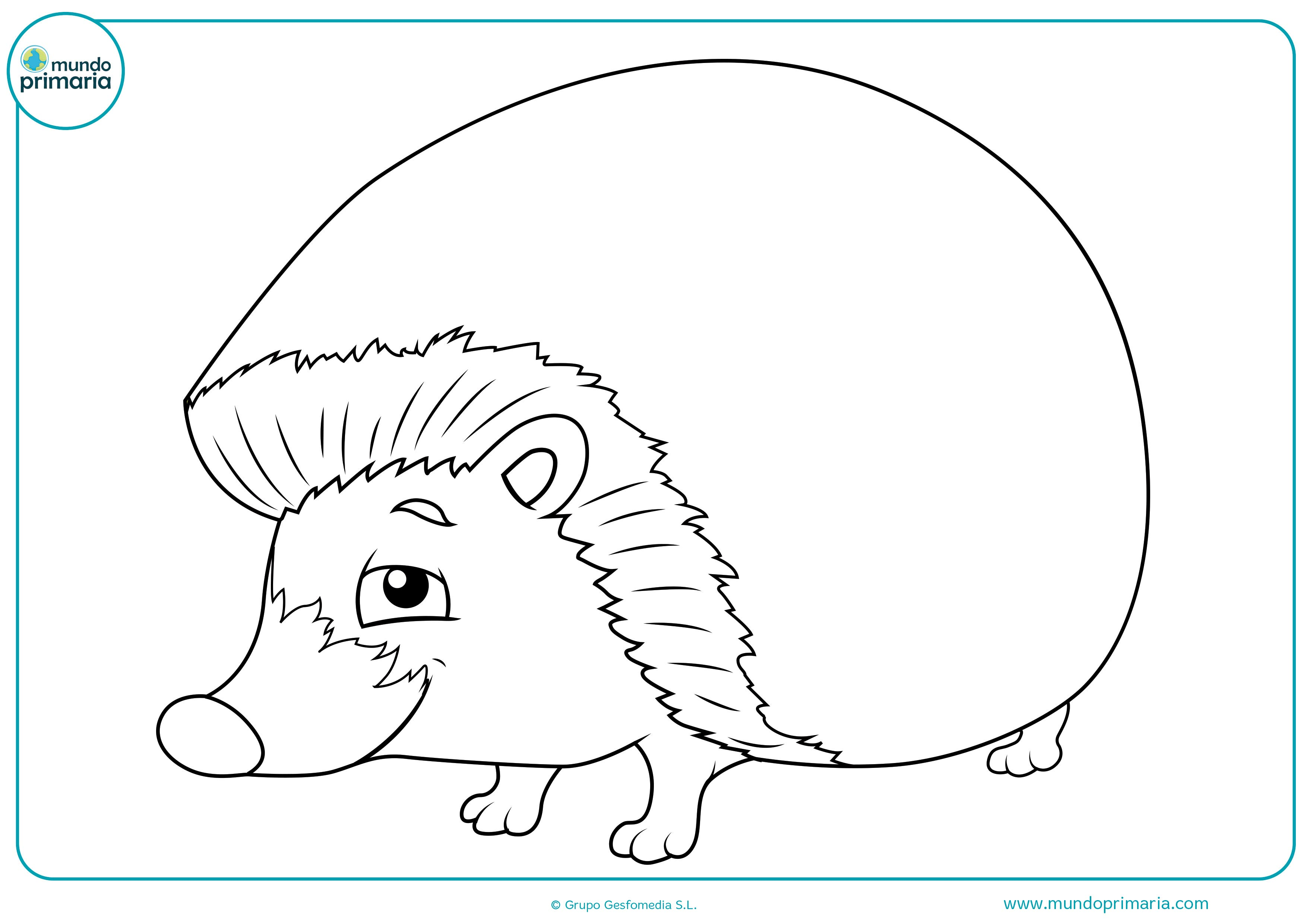 Dibujos De Animales Del Bosque Para Colorear Mundo Primaria