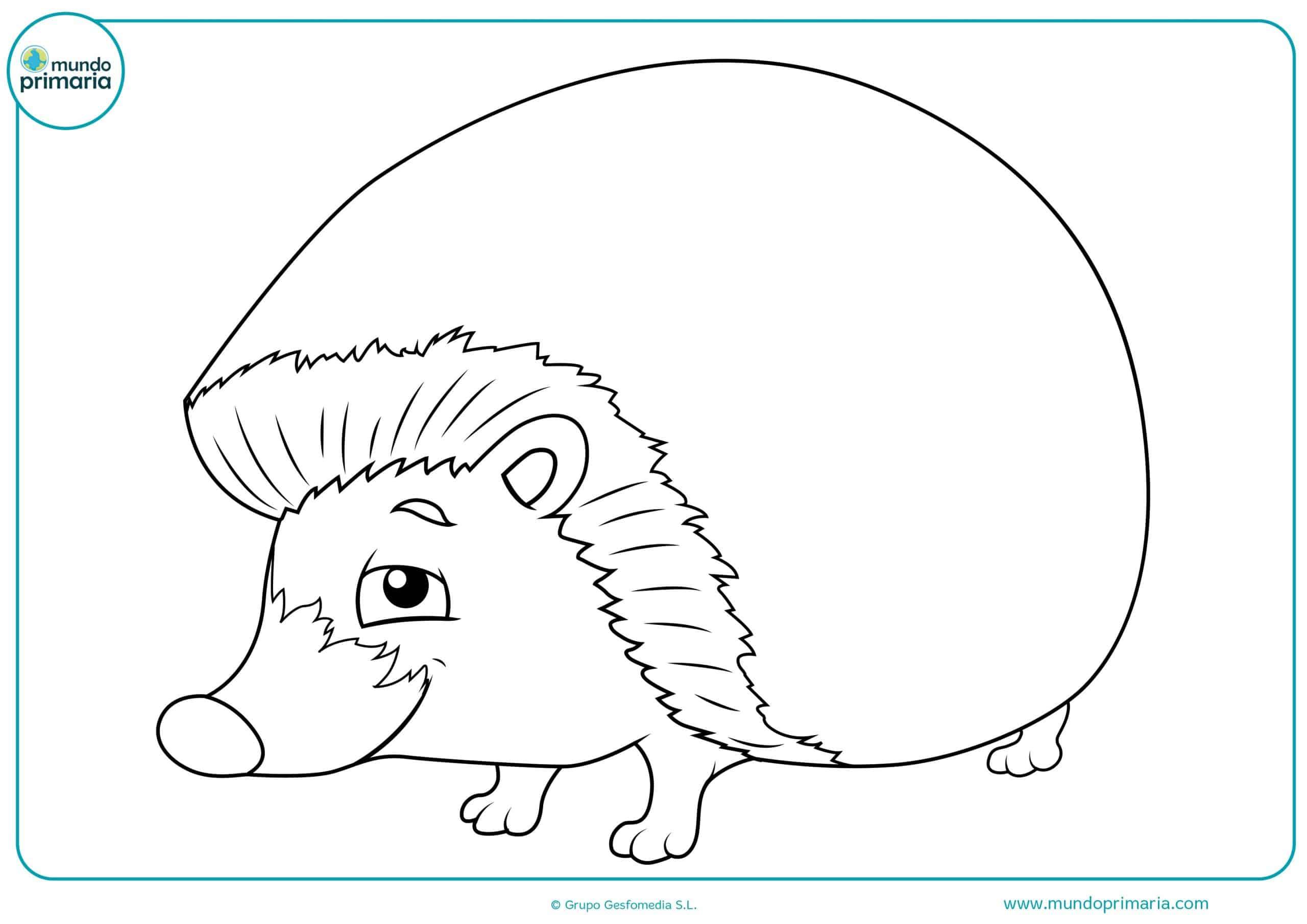 Dibujos animales bosque para pintar