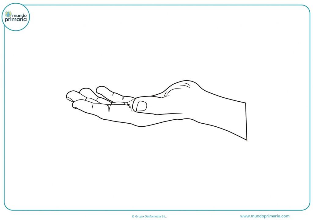 Colorea la mano derecha abierta