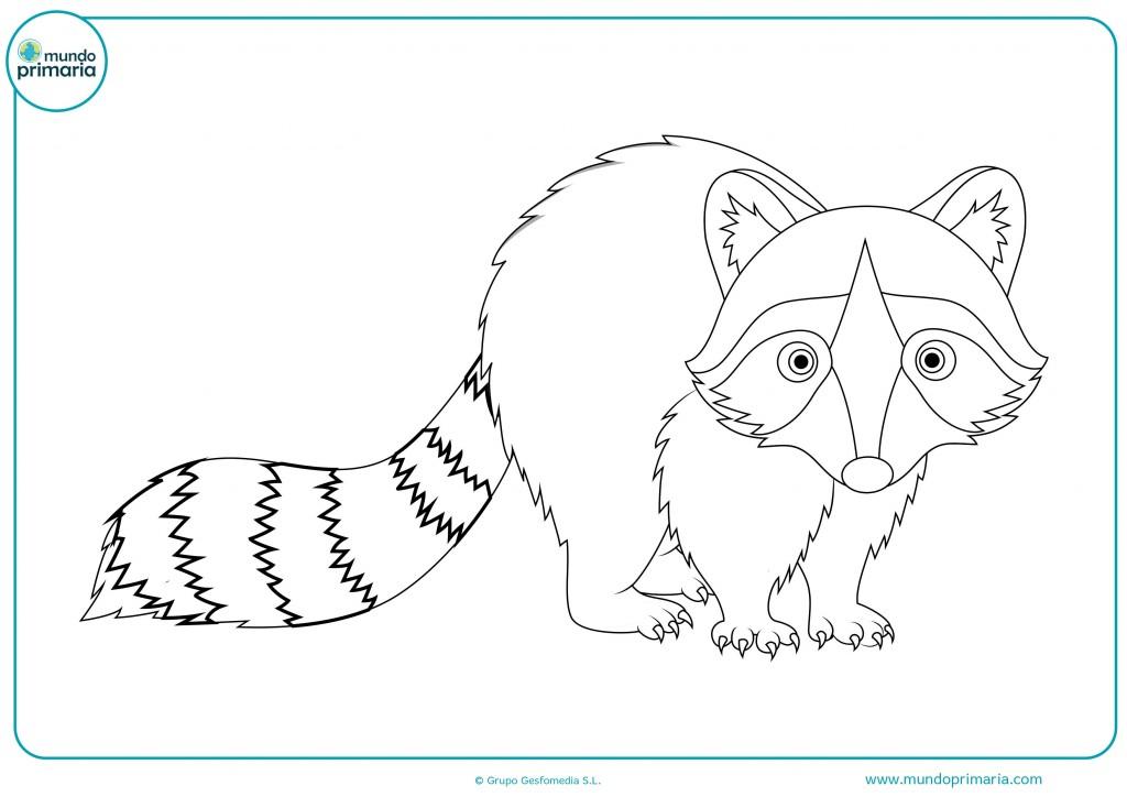 Colorea este dibujo de un mapache de perfil