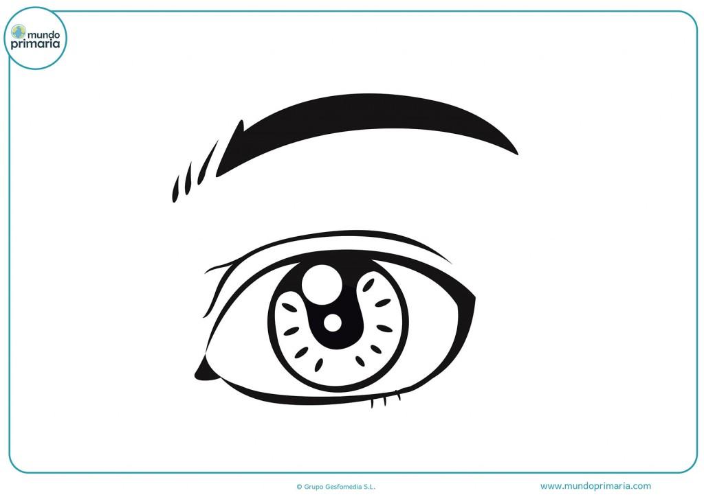 Con colores pinta el ojo y la ceja para completar el dibujo