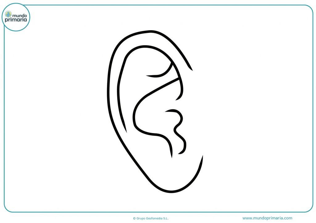 Imagen de una oreja derecha para colorear