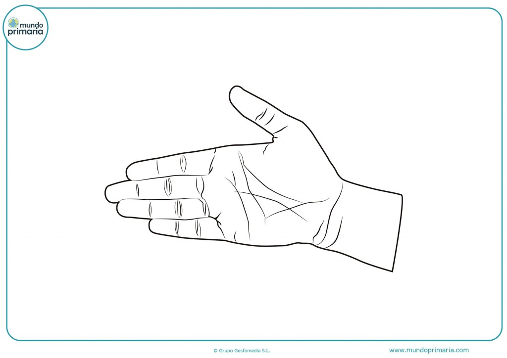 Descarga esta imagen de una palma abierta