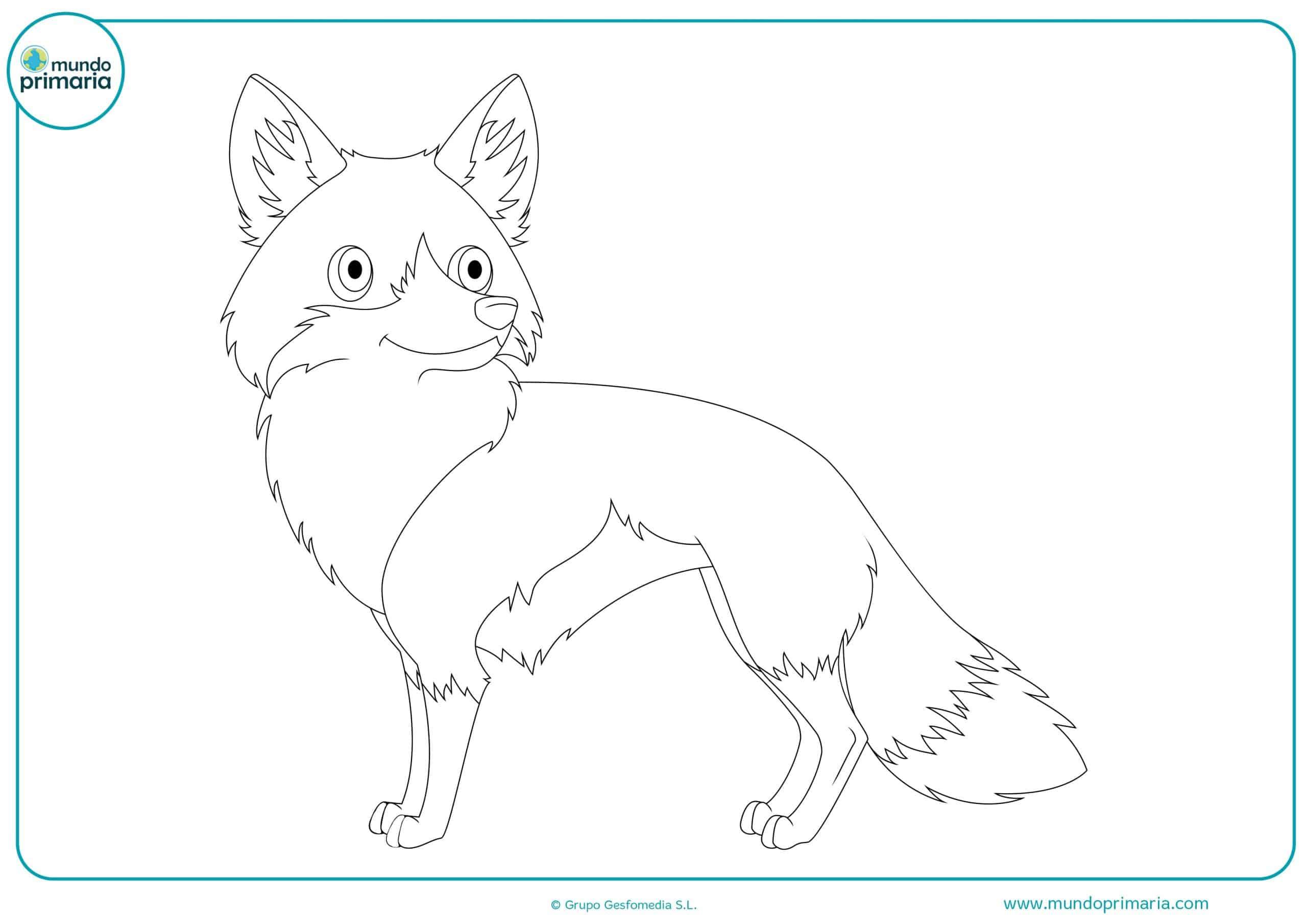 Dibujos animales bosque para niños y niñas