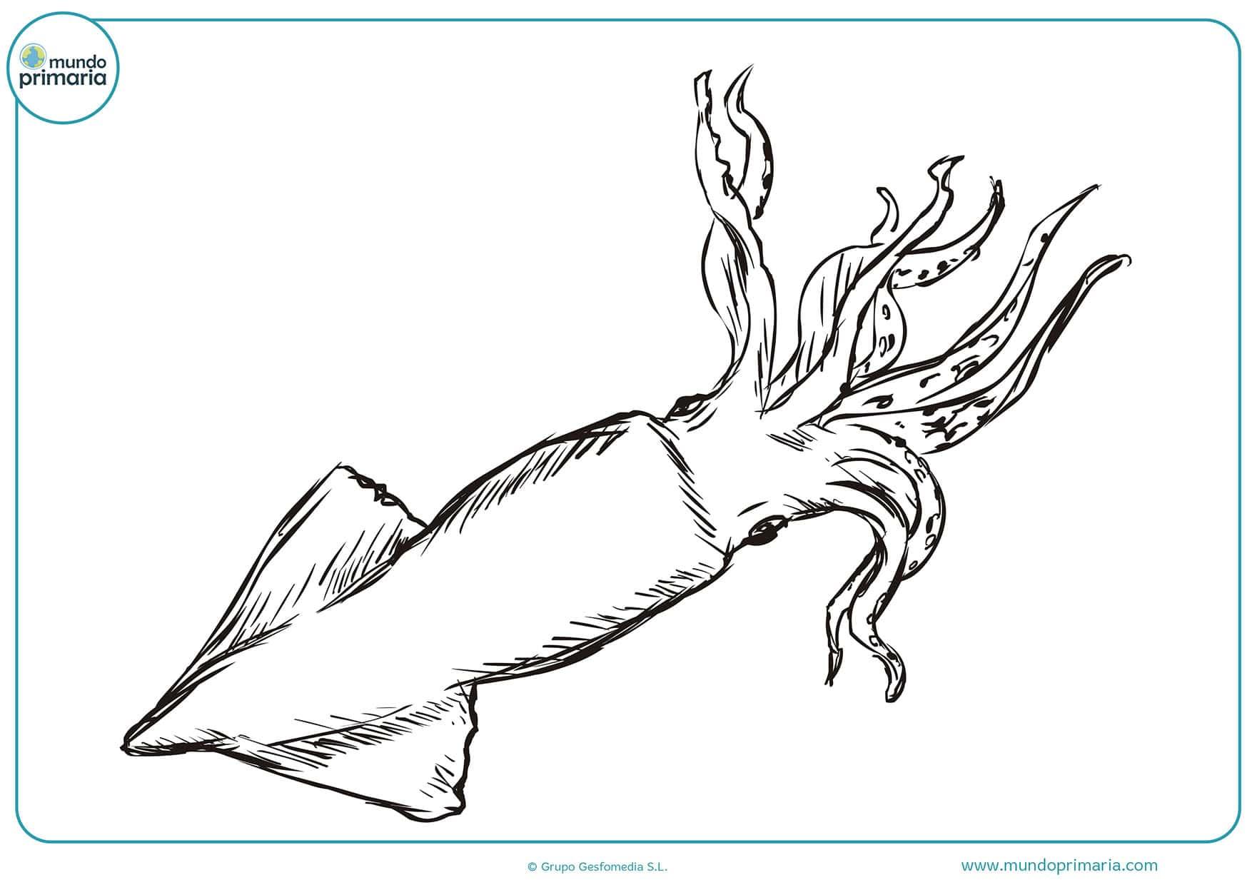 Dibujos pescado para pintar