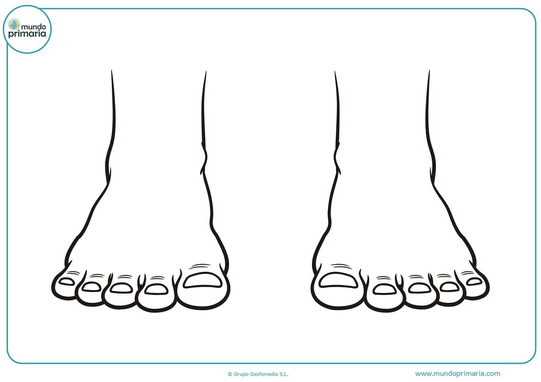 Dibujos cuerpo humano para niños y niñas