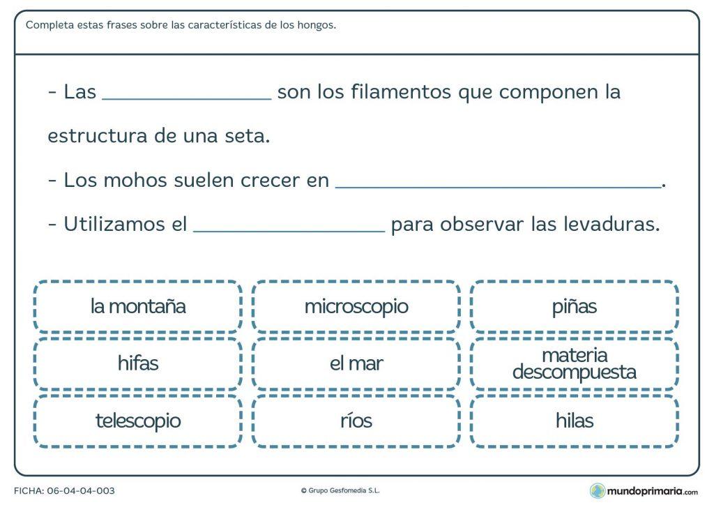 Ficha de las características de los hongos