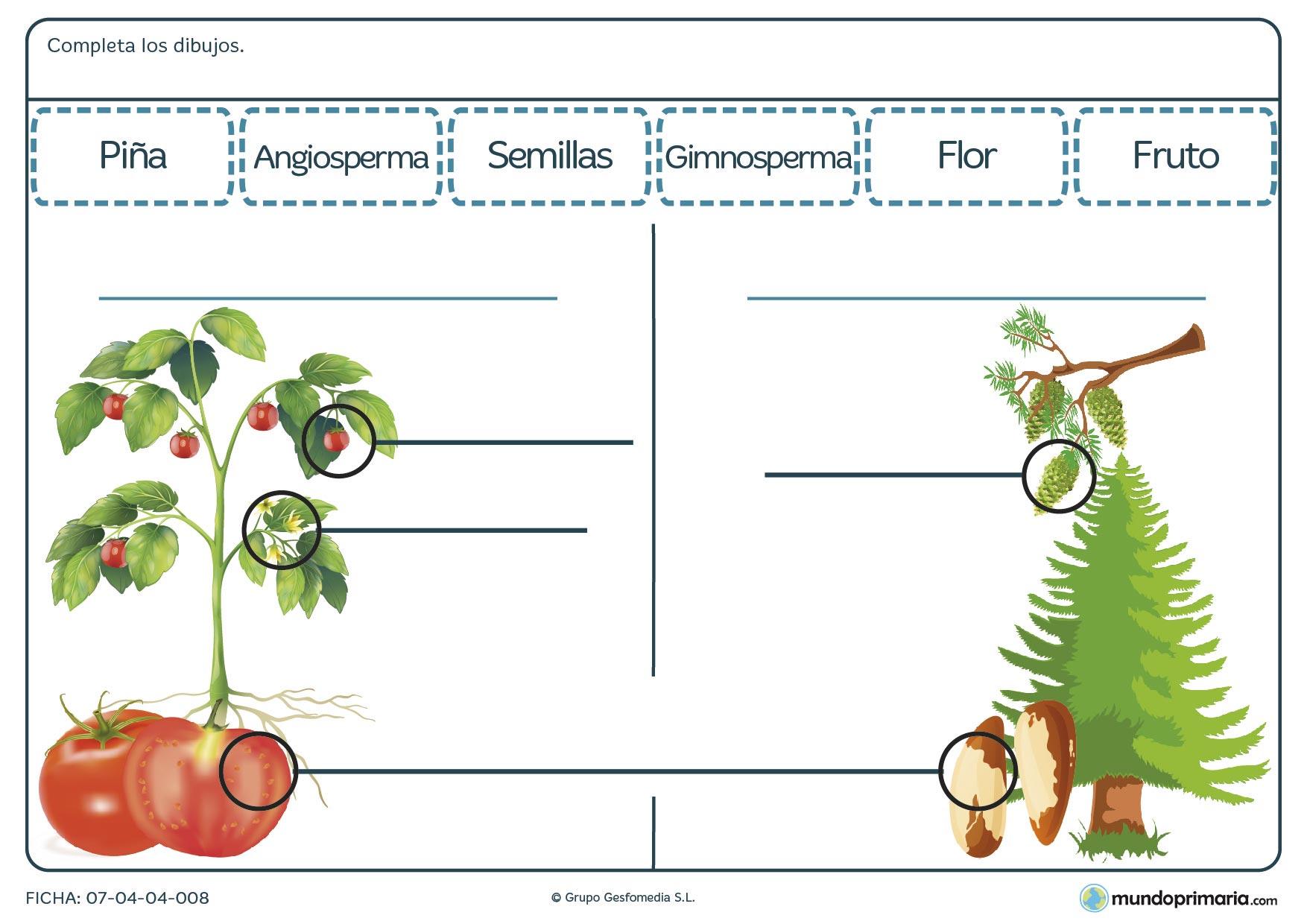 Ficha de conocer los frutos de una planta