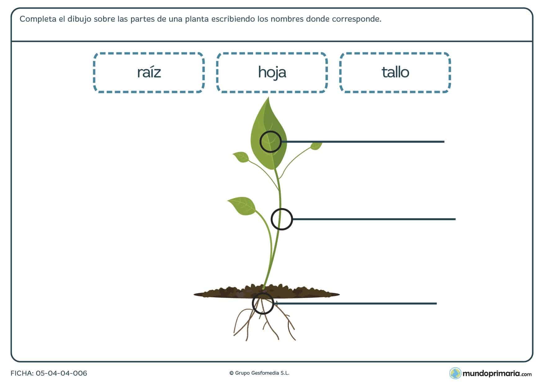 Ficha de las partes de una planta para primaria mundo - Fichas de plantas para ninos ...