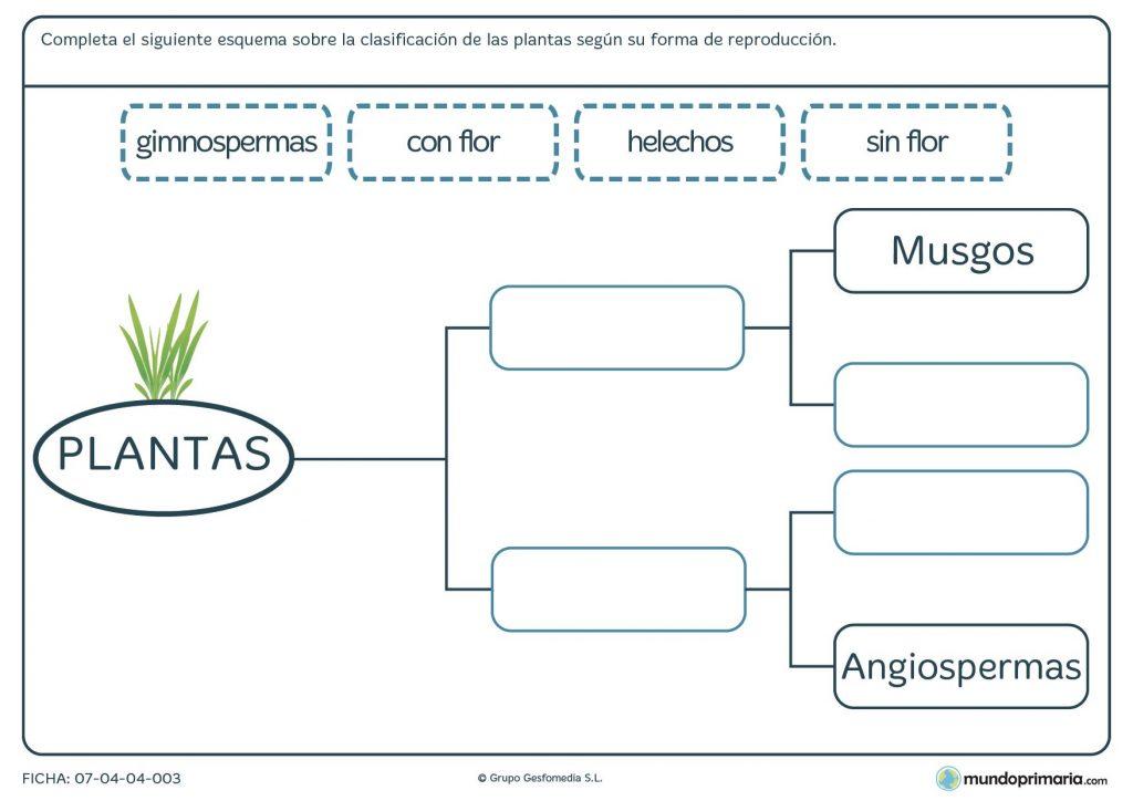 Ficha de la reproducción de una planta