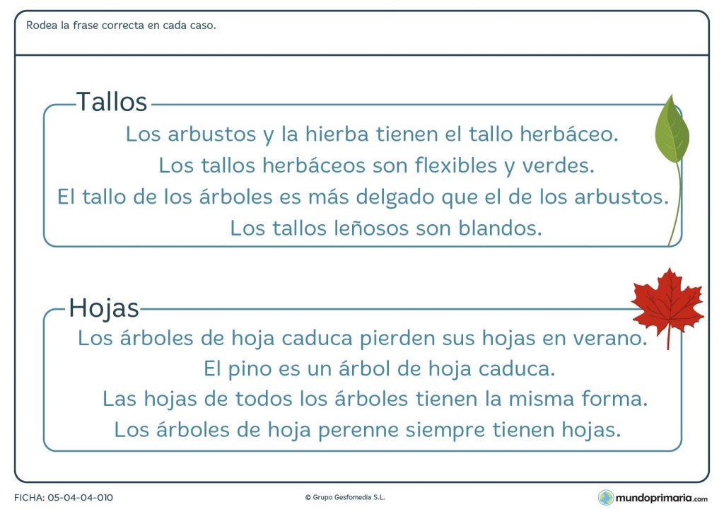 Ficha de tallos y hojas para primaria