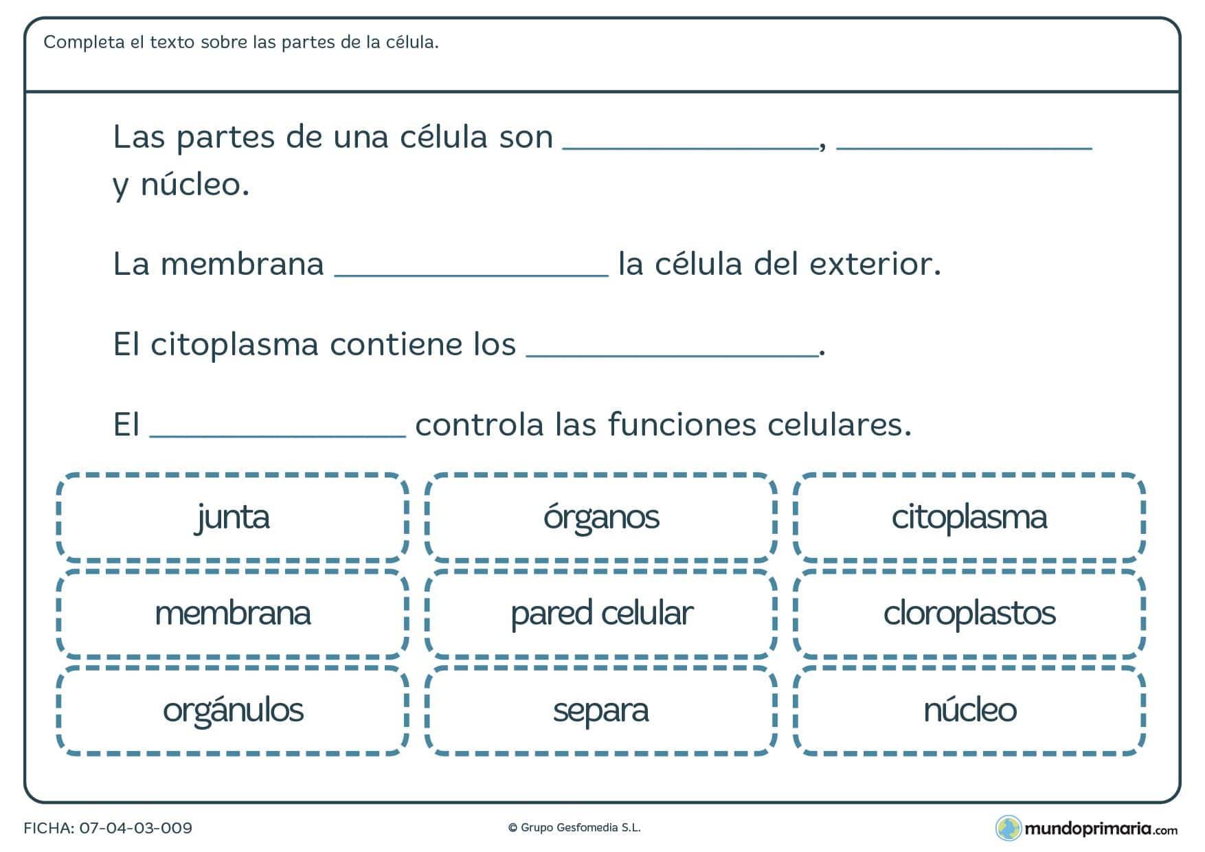 Ficha de texto sobre la célula para primaria