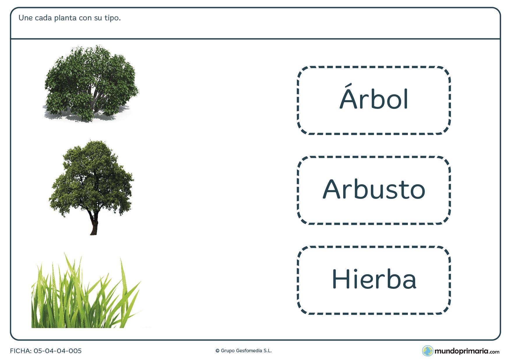 Ficha de tipos de plantas para primaria mundo primaria - Fichas de plantas para ninos ...