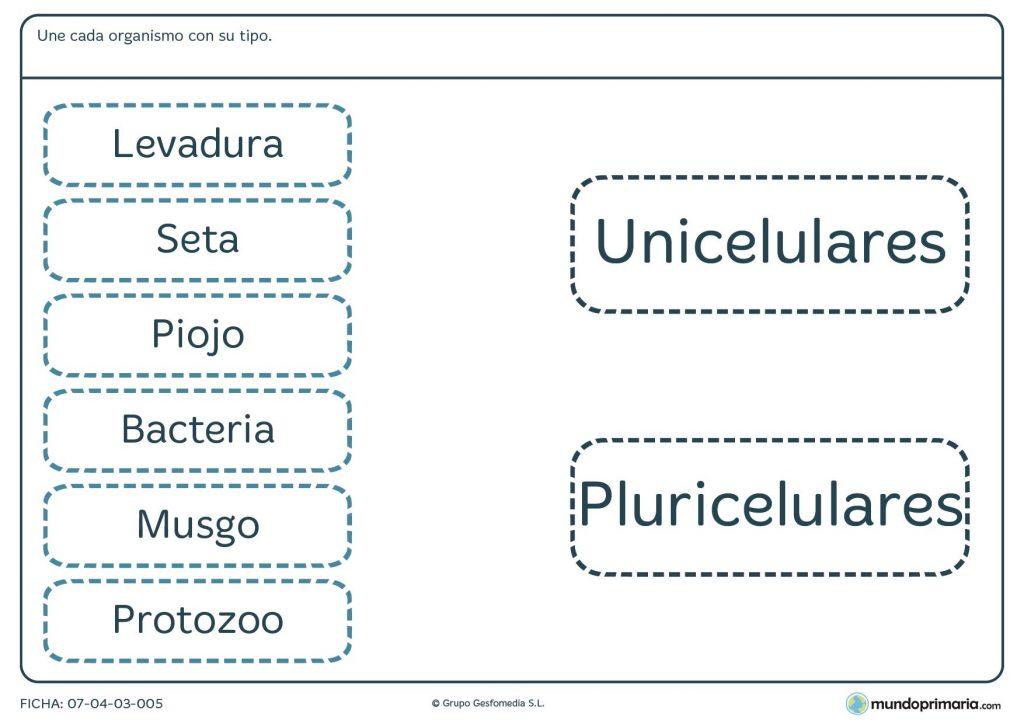 Ficha de organismos unicelulares y pluricelulares