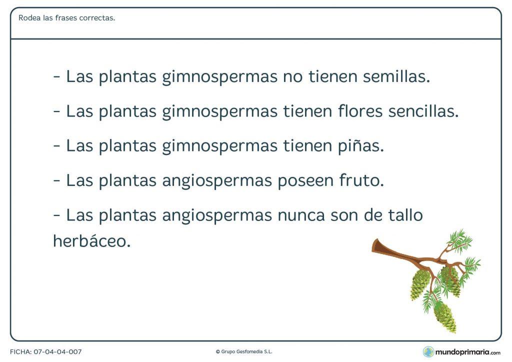 Ficha de las distintos tipos de planta para primaria