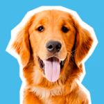 Mascotas y niños: 9 beneficios