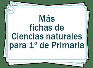 Ejercicios De Ciencias Naturales Mundo Primaria