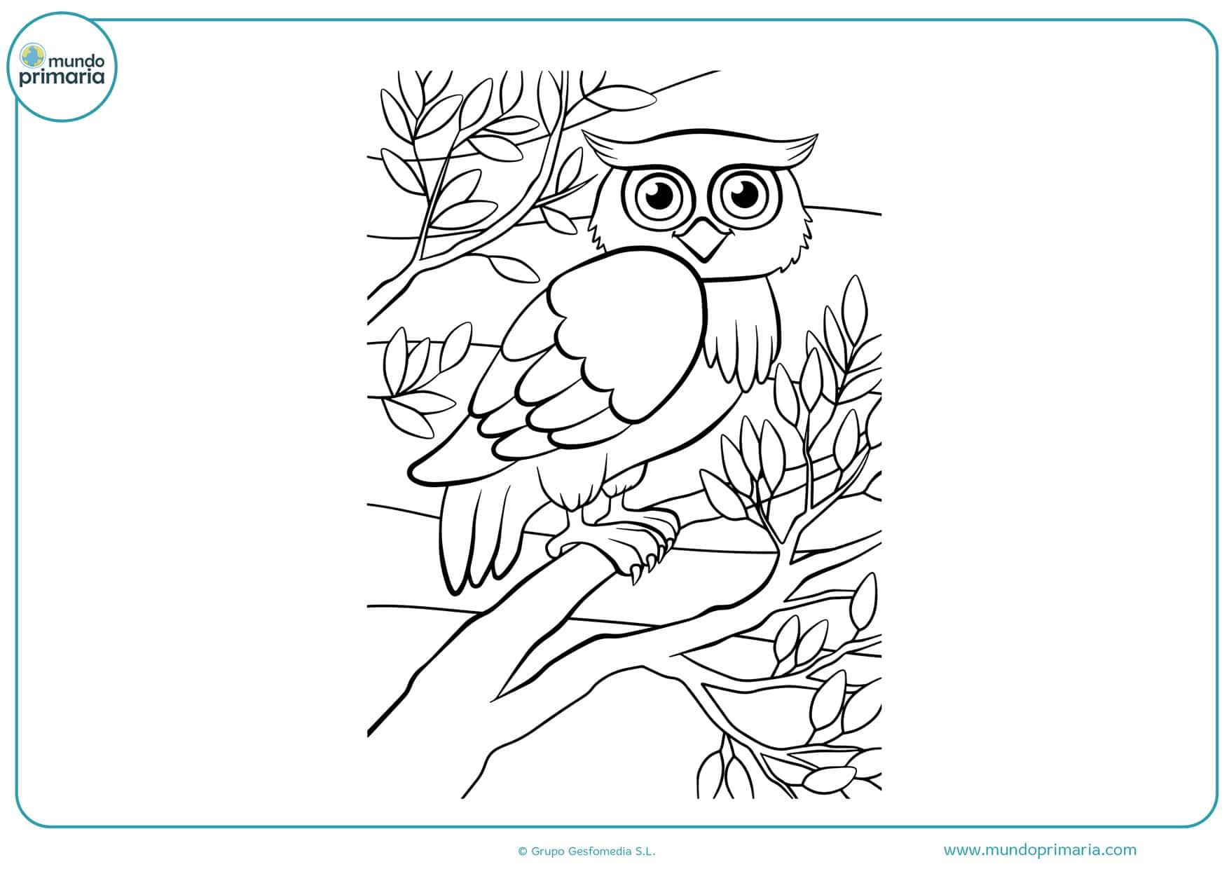 ▷ Dibujos de Búhos para Colorear 【Imprimir y Pintar】