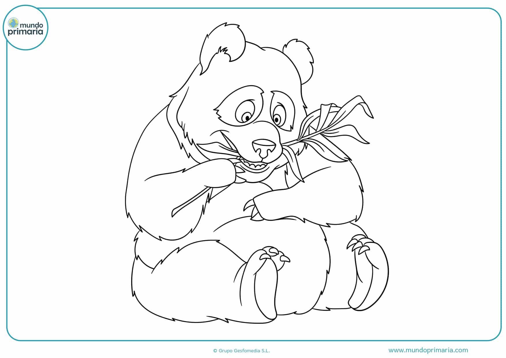 dibujos de osos panda para colorear