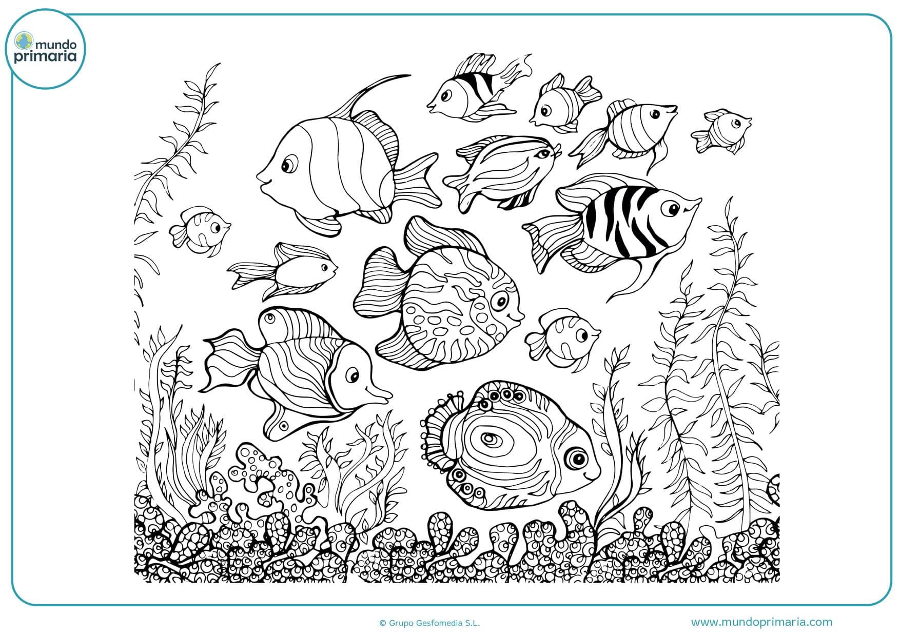 Dibujos De Peces Para Colorear Imprimir Gratis