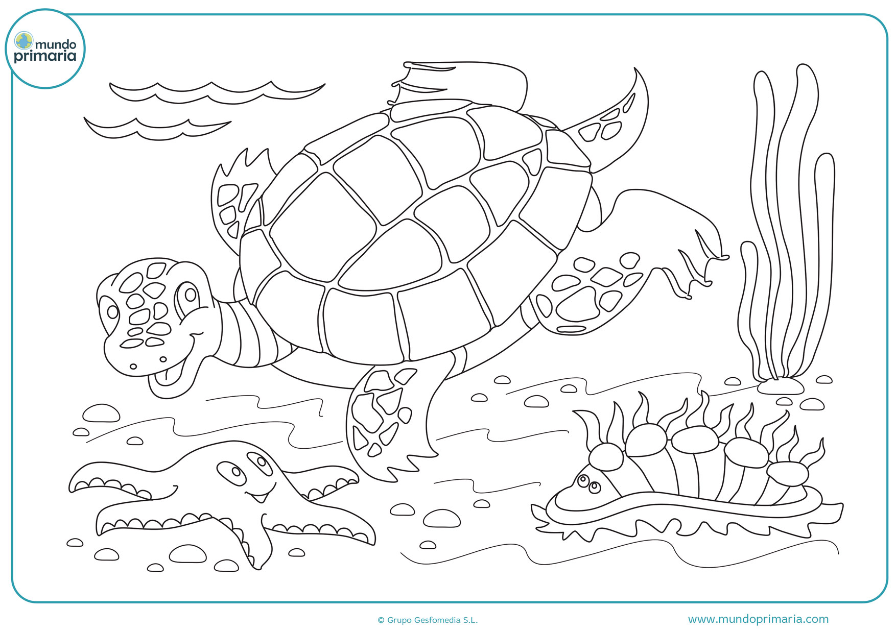 dibujos para colorear de tortugas de agua dulce