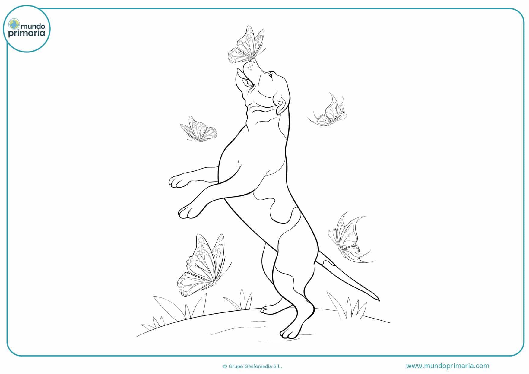 dibujos de perros bulldog para colorear