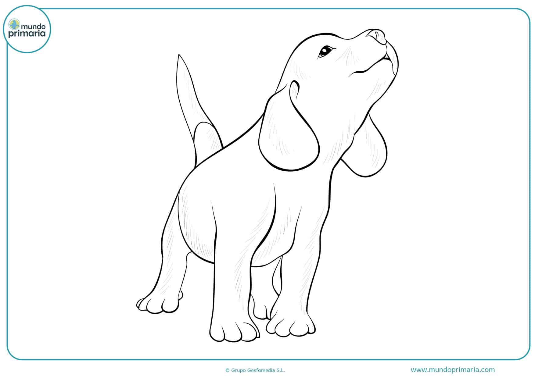 dibujos de perros labradores para colorear