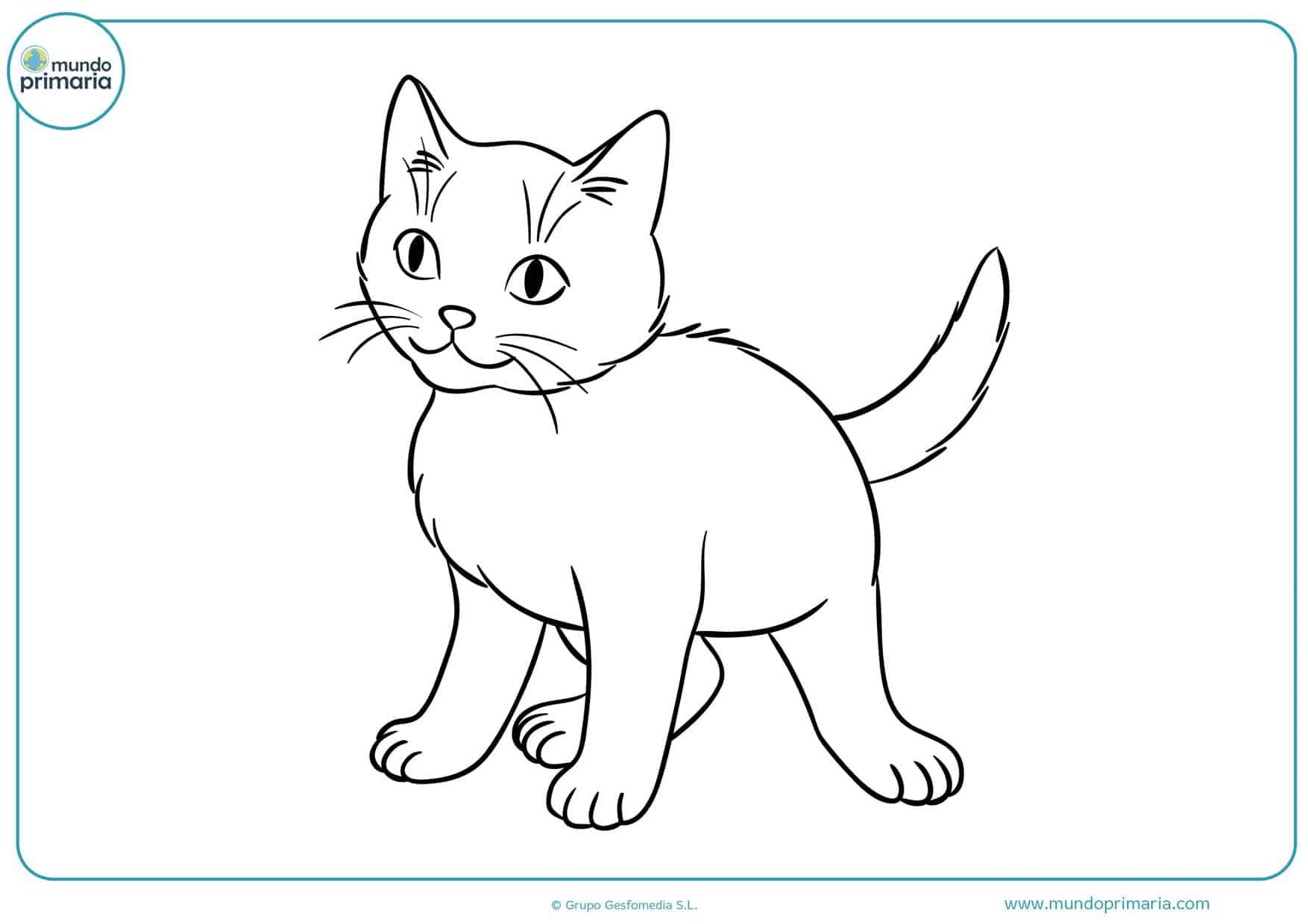 imágenes de gatos pequeños para colorear