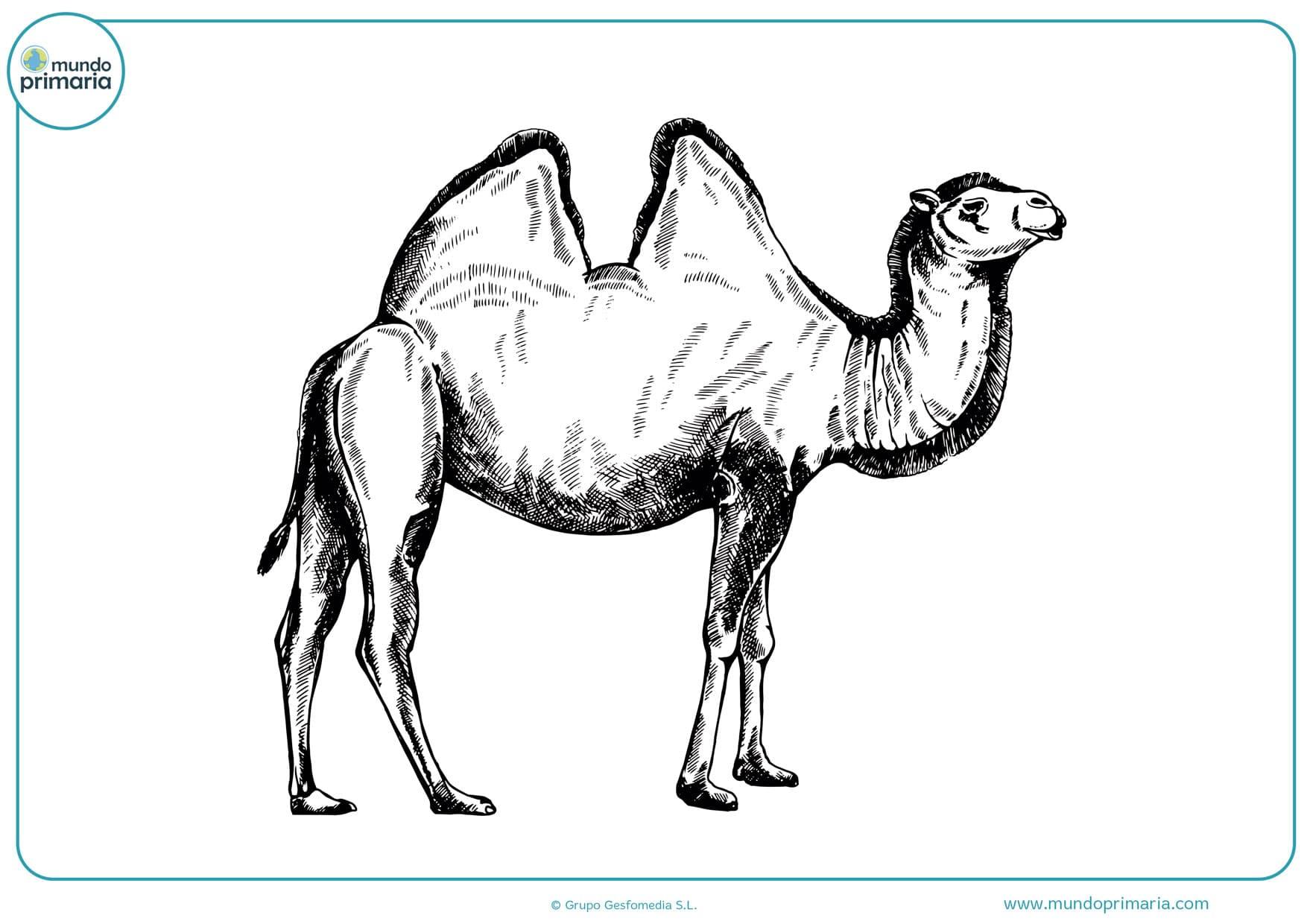 dibujo de animales a lápiz para imprimir y colorear
