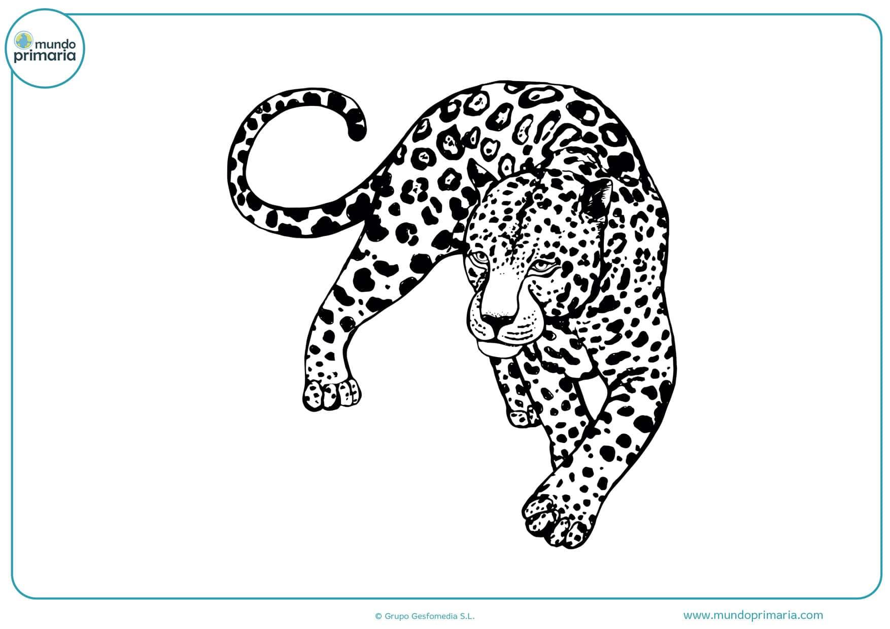 dibujos de animales a lápiz para colorear