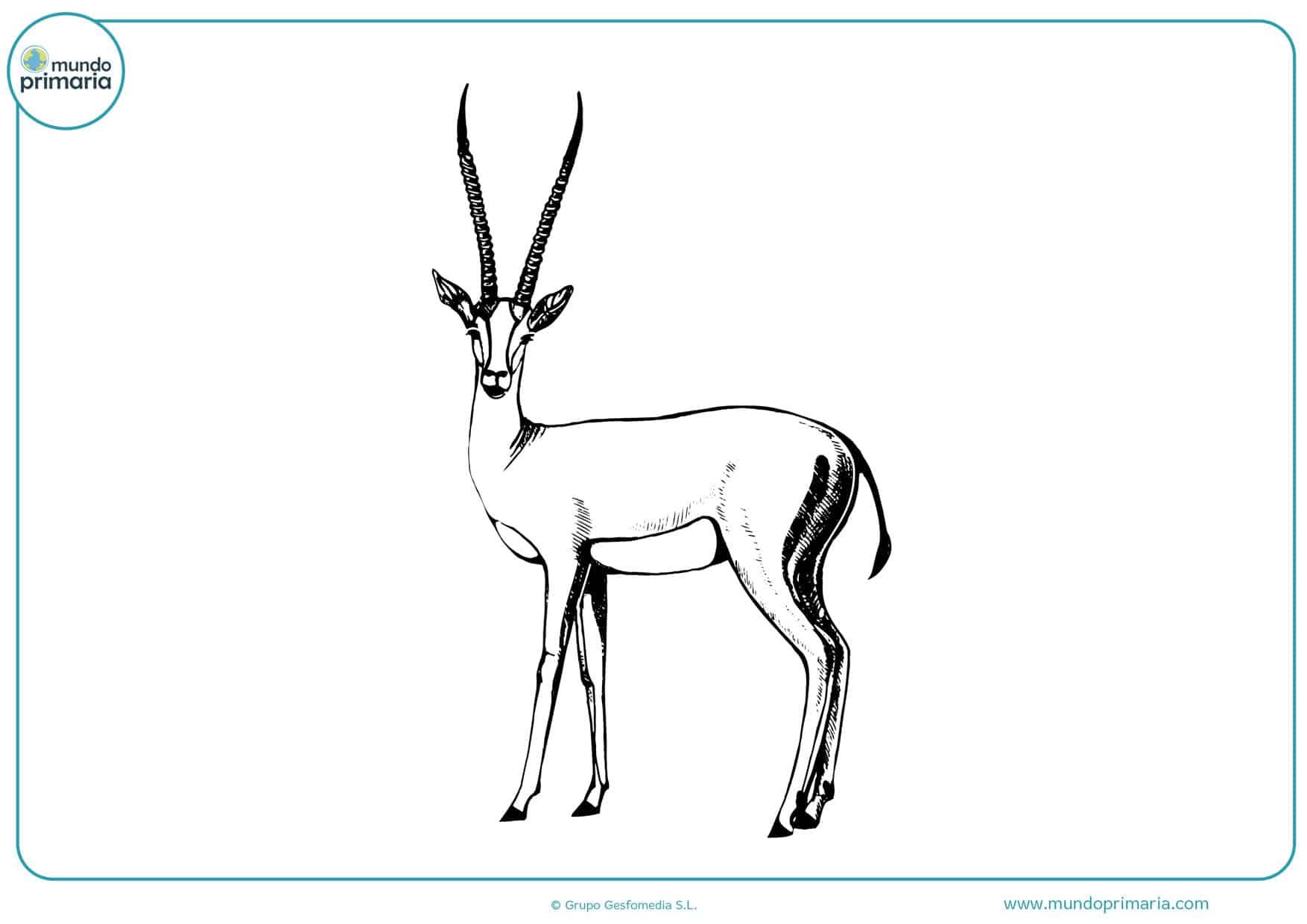 dibujos de animales a lápiz para pintar