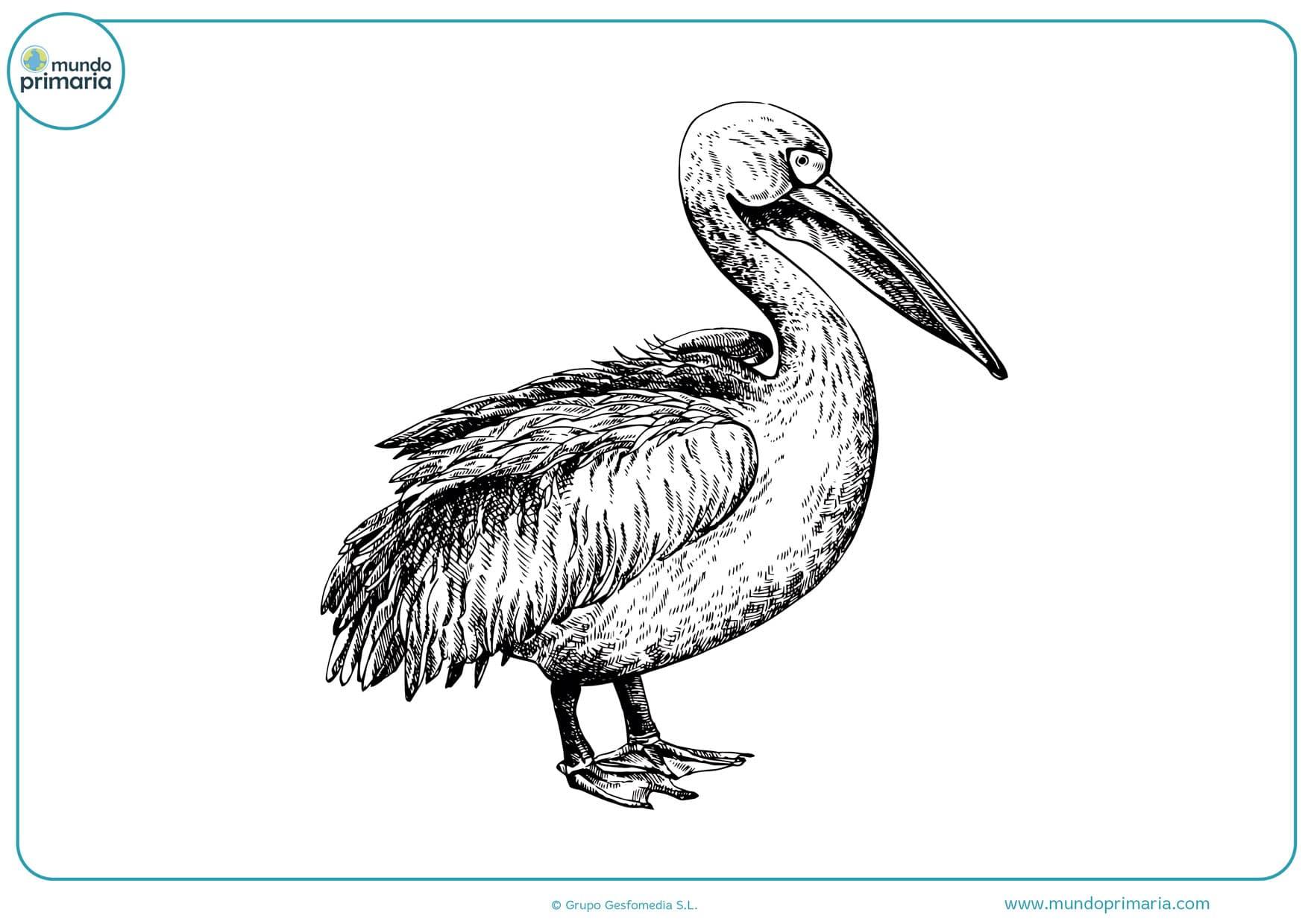 dibujos de aves a lápiz para colorear