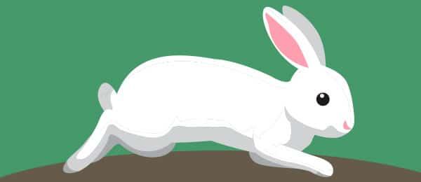 Cuento Astucia Conejo