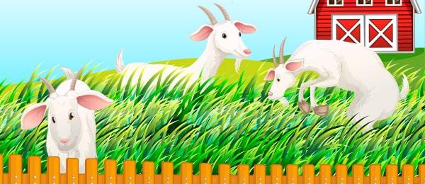 Cuento Tres Cabras