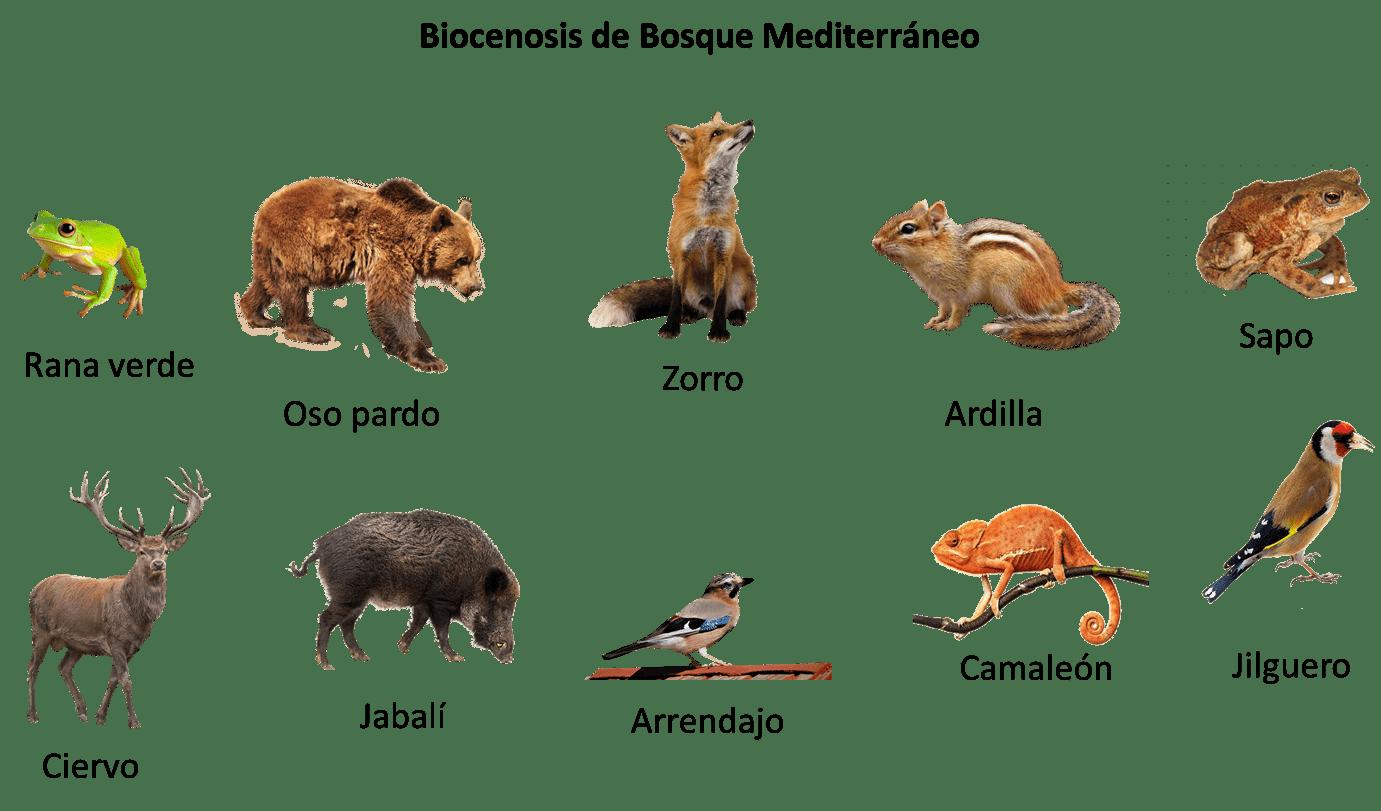 Biocenosis bosque Mediterráneo
