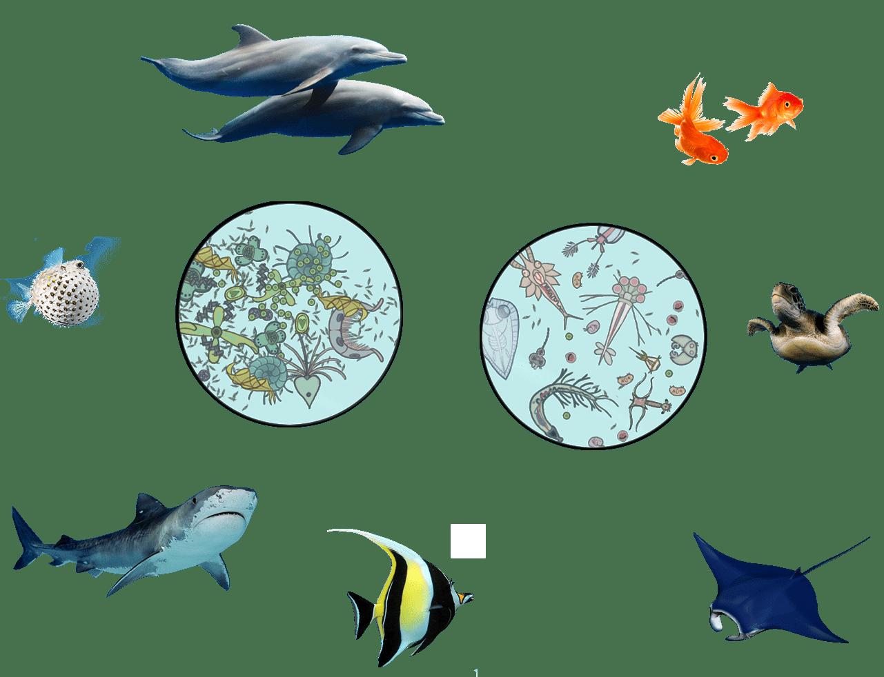 Biocenosis Marina