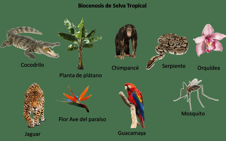 Biocenosis selva tropical