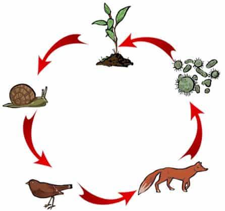 Ecosistemas para niños