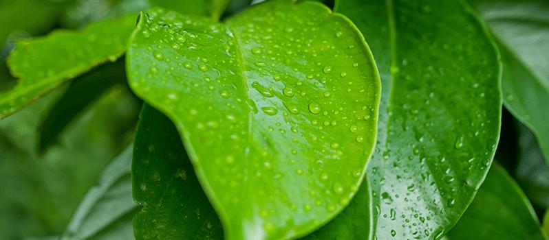 Factores ambientales del biotopo para Primaria