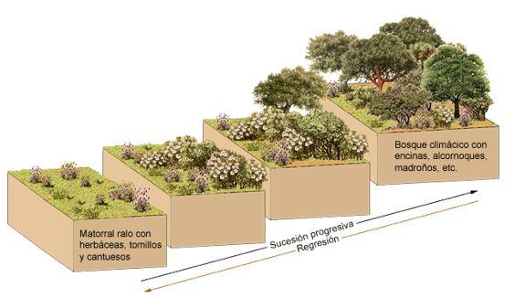 Los ecosistemas para niños Primaria