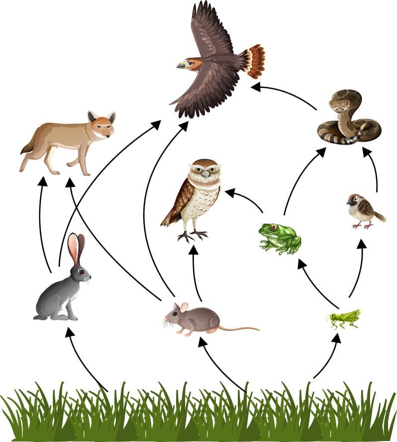 Qué es la cadena alimentaria
